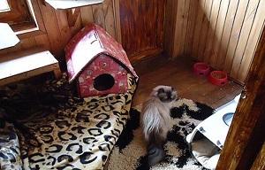 Гостиницы для животных в Москве