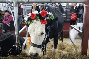 Животноводство в Москве