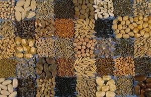 Семена - магазины в Москве